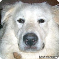 Adopt A Pet :: Max in MD - new! - Beacon, NY