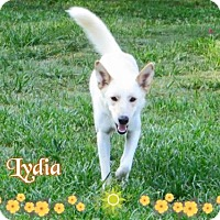 Adopt A Pet :: Lydia - Longview, TX
