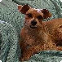 Adopt A Pet :: Tango - Deer Park, TX