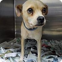 Adopt A Pet :: Stacy - Miami, FL