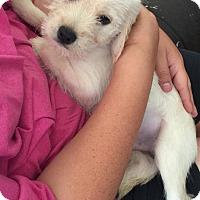 Adopt A Pet :: Hershey - Alden, NY