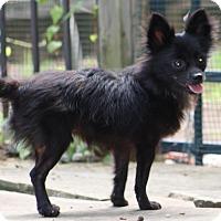 Adopt A Pet :: Miles - Dallas, TX