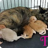 Adopt A Pet :: Tilly+ 5 - California City, CA