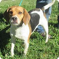 Adopt A Pet :: Teddy - Reeds Spring, MO