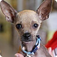 Adopt A Pet :: Kiwi - Pacific Grove, CA