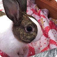 Adopt A Pet :: Wrigley - Aurora, IL