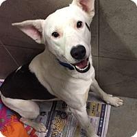 Adopt A Pet :: Glenn - Hopkinton, MA