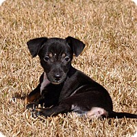Adopt A Pet :: Hope - Mobile, AL