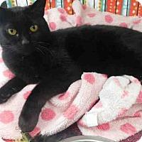 Adopt A Pet :: EVE - McKinleyville, CA