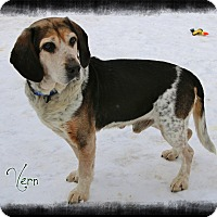 Adopt A Pet :: Vern - Shippenville, PA