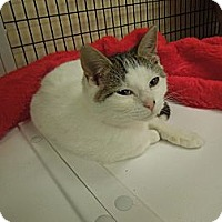 Adopt A Pet :: Abbey - Medina, OH