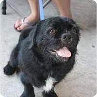 Adopt A Pet :: Otis - Arlington, TX