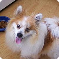 Adopt A Pet :: Fancy - Chewelah, WA