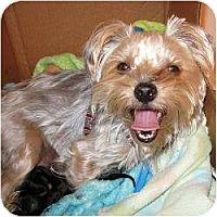 Adopt A Pet :: Lindie - Hardy, VA