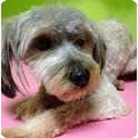 Adopt A Pet :: Tucker - pasadena, CA