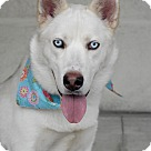 Adopt A Pet :: Joaquin