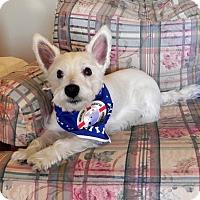 Adopt A Pet :: Maxie - Carrollton, TX