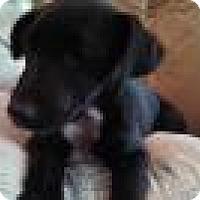 Adopt A Pet :: Amos - Warrenton, NC