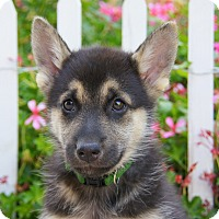 Adopt A Pet :: Caleb von Calw - Thousand Oaks, CA