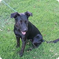 Adopt A Pet :: Lexie - Staunton, VA