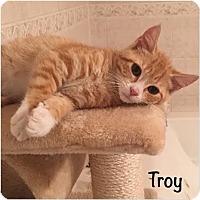 Adopt A Pet :: Troy - Toms River, NJ