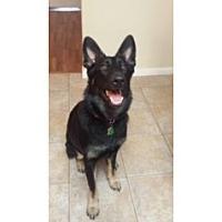 Adopt A Pet :: Jadis - Houston, TX