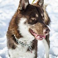 Adopt A Pet :: Ojo - Salt Lake City, UT