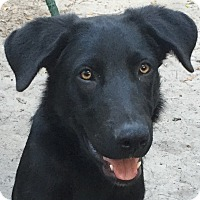 Adopt A Pet :: Duke - Orlando, FL