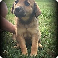 Adopt A Pet :: Myla - Denver, NC