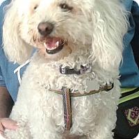 Adopt A Pet :: Chloe - Thousand Oaks, CA