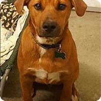Adopt A Pet :: Vinny - Neosho, MO