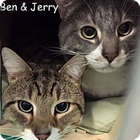 Adopt A Pet :: BEN - Cliffside Park, NJ