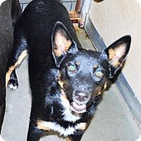 Adopt A Pet :: Tootie - San Jacinto, CA