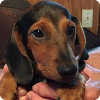 Adopt A Pet :: MENA BARKLEY - Waldron, AR