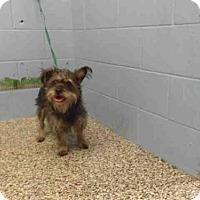 Adopt A Pet :: A496997 - San Bernardino, CA