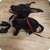 Adopt A Pet :: GUMDROP - Pearland, TX