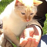 Adopt A Pet :: Perkii - Lodi, CA