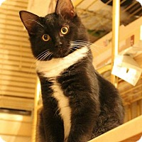 Adopt A Pet :: Tux - Fort Worth, TX