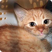 Adopt A Pet :: Marlena - Wildomar, CA