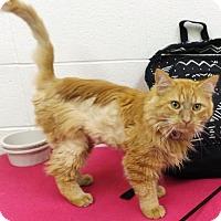Adopt A Pet :: Gumdrop - Crown Point, IN