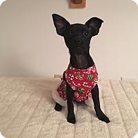 Adopt A Pet :: Virginia - Carlsbad, CA