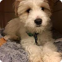 Adopt A Pet :: Ralphie - Los Angeles, CA