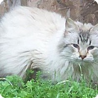 Adopt A Pet :: Mr. Bingley - Ennis, TX