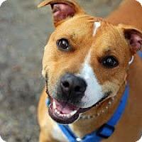 Adopt A Pet :: Petunia - Tinton Falls, NJ