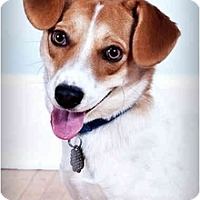 Adopt A Pet :: Minnie - Owensboro, KY