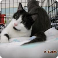 Adopt A Pet :: Gavin - Riverside, RI