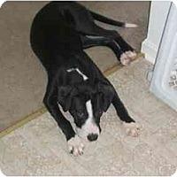 Adopt A Pet :: Isabella - Reisterstown, MD