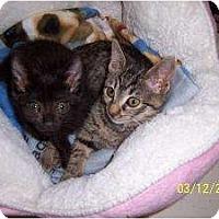 Adopt A Pet :: Tiny & Willie - Island Park, NY