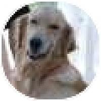 Adopt A Pet :: Shirley - Denver, CO