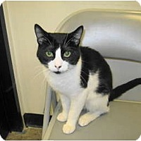 Adopt A Pet :: Domino - Warminster, PA
